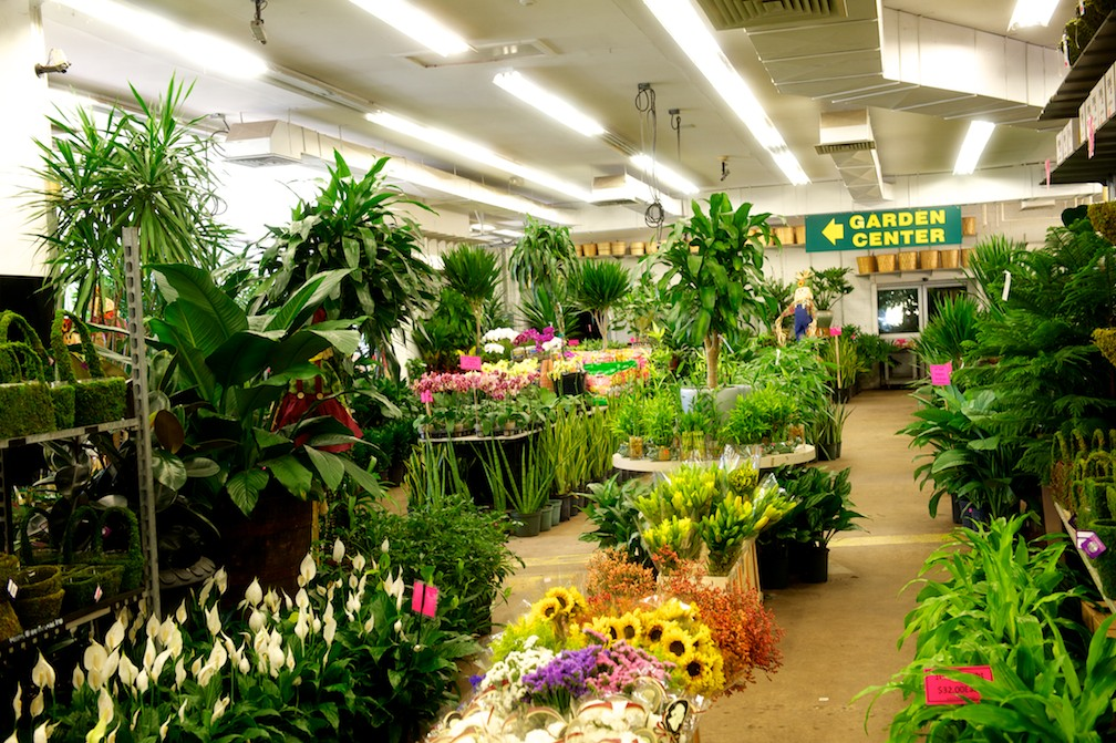 Nj and nyc wholesale flowers and garden center for Indoor gardening nyc