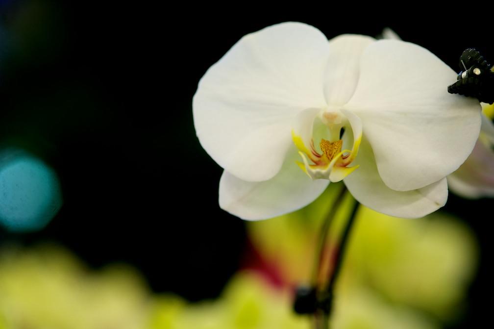 nj-wholesale-orchids-flowers