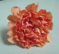 Santa Fe Carnations