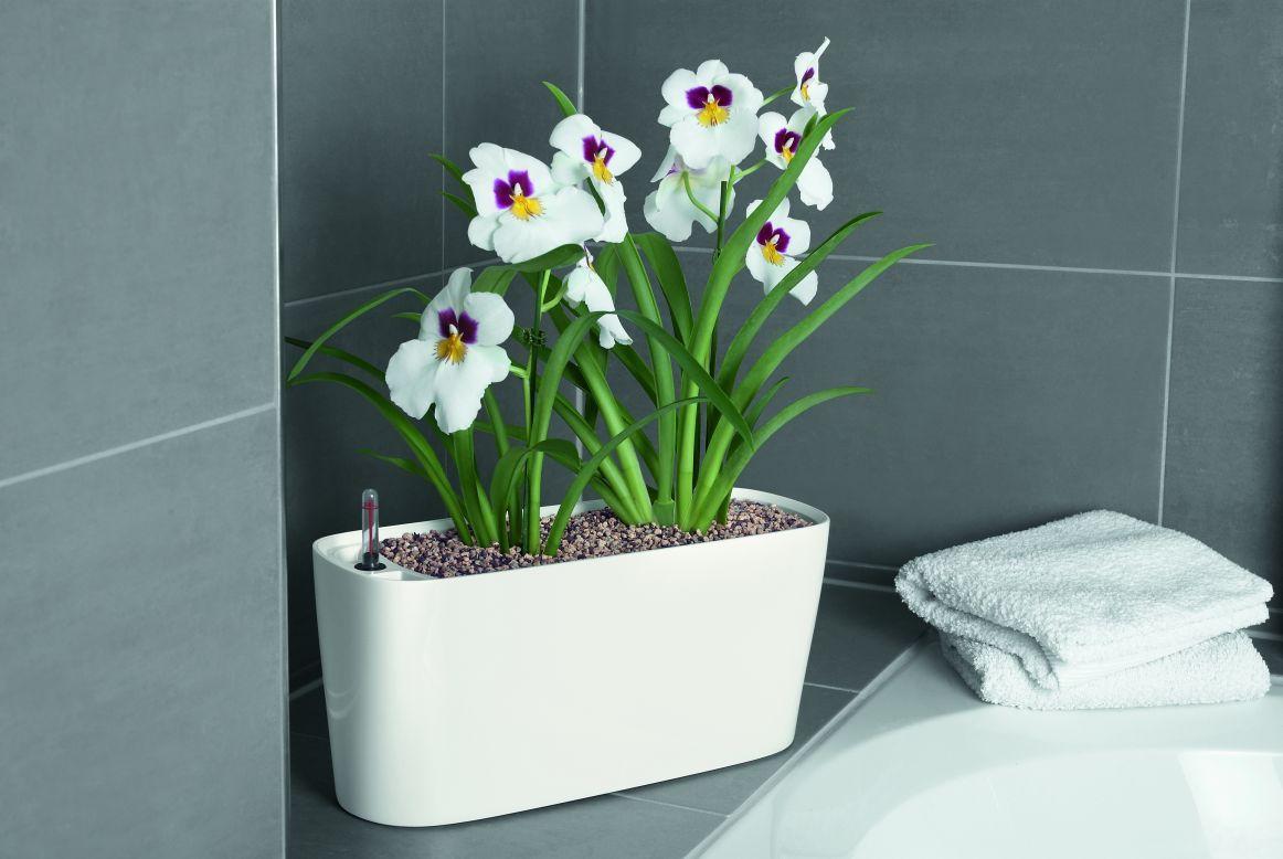 Lechuza delta 20 self watering planter metropolitan wholesale metropolitan wholesale - Lechuza self watering planter ...