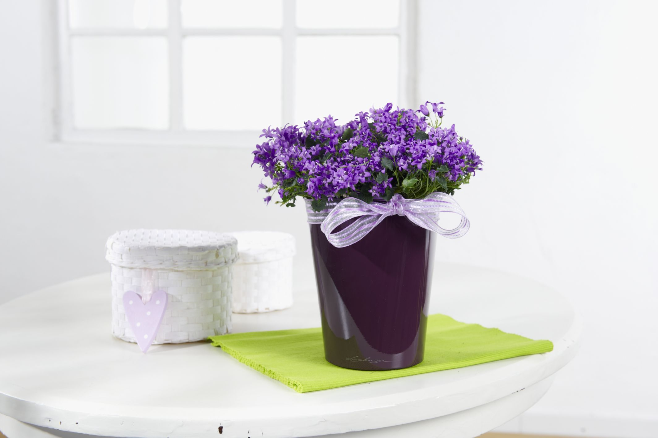 Wholesale indoor flowering plant seasonal availability for Indoor flowers and plants