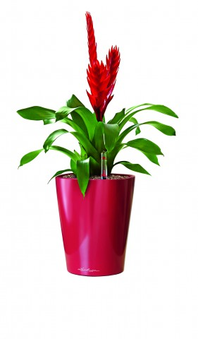 Lechuza Deltini Scarlet Red High Gloss Self Watering Table Planter