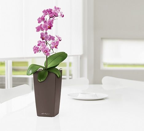 Lechuza Maxi Cubi Espresso Self Watering Table Top Planter