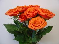 Wholesale Spray Rose Babe
