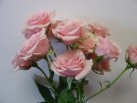 Spray Rose Majolica