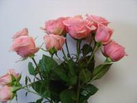 Spray Rose Sweet Sensation