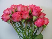 Spray Rose Twinkle Bride