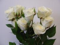 Spray Rose Viviane