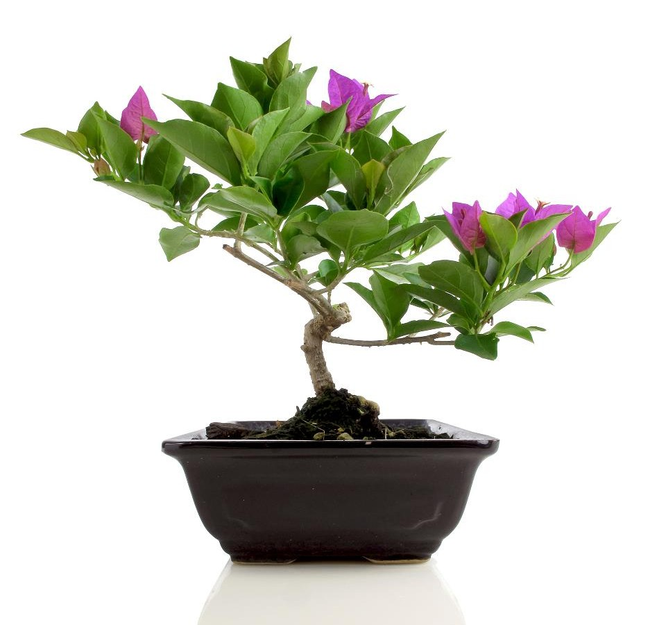 Indoor Flowering Plants Archives Metropolitan Wholesale