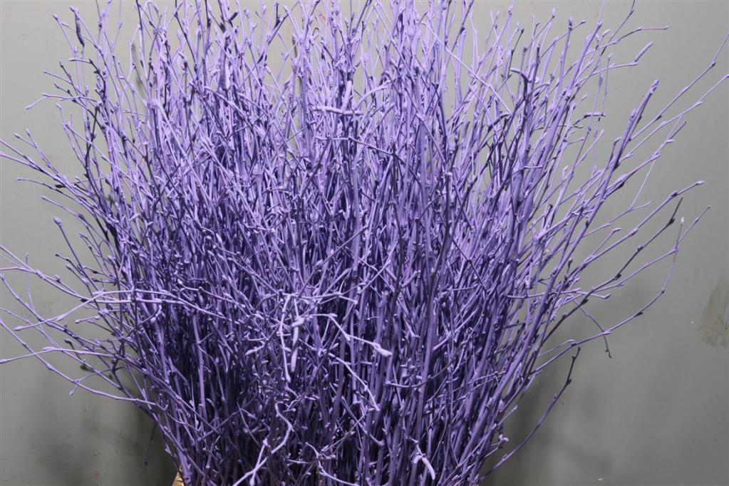 Birch Dyed Purple