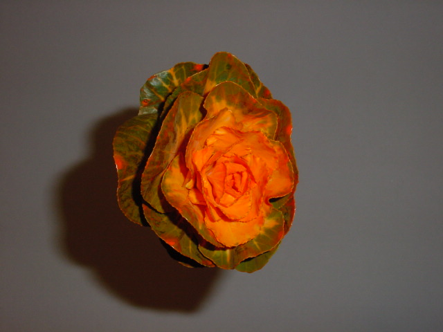 Brassica Dyed Orange