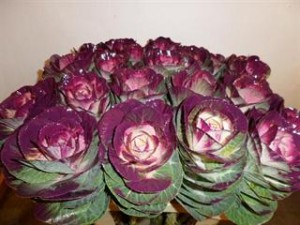 Dyed Purple Brassica
