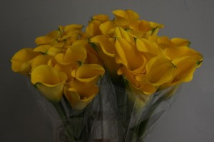 Calla Lily Best Gold