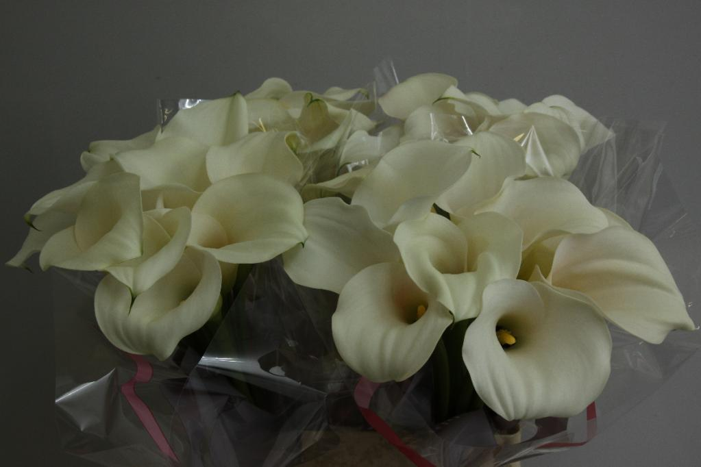Wholesale Calla Lily Ventura