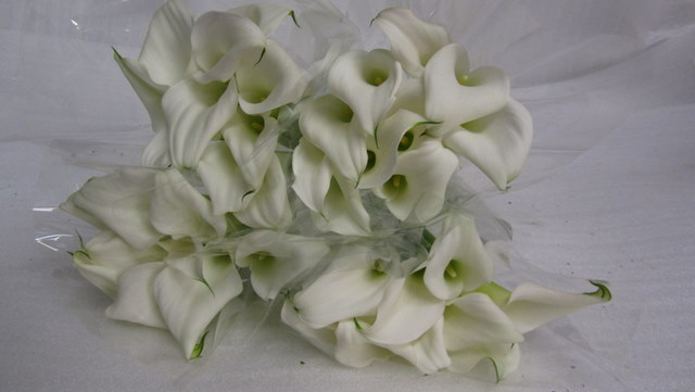 Calla Lily Crystal Pure