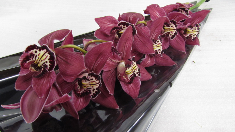 Cymbidium Crosslanding