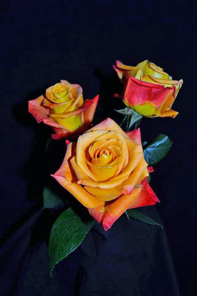 Voodoo Roses