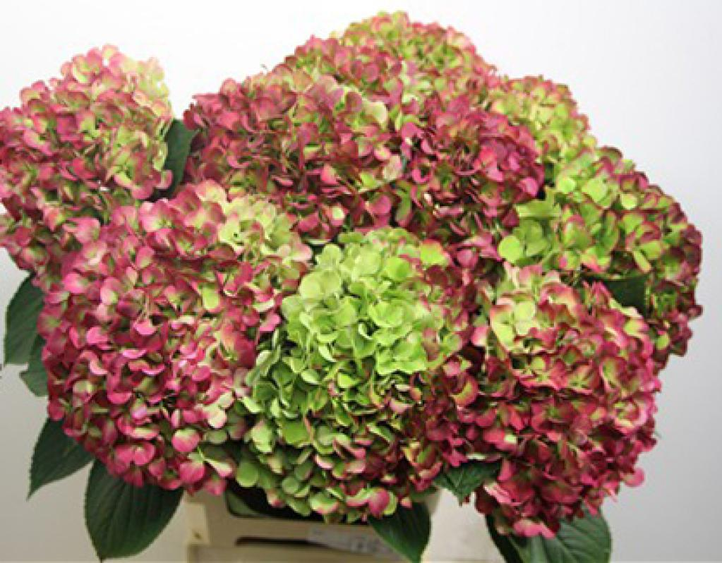 pics for gt antique green hydrangea bouquet