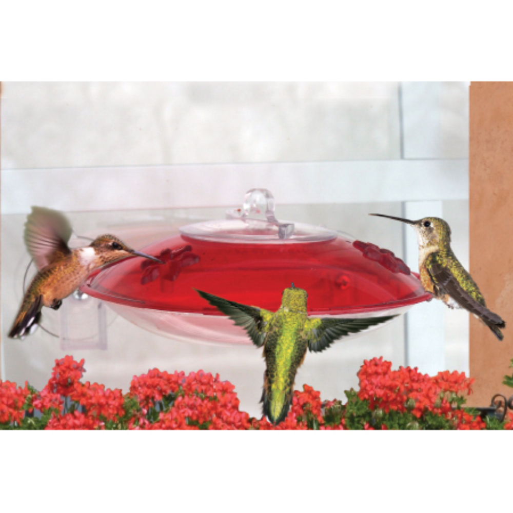 Window Mount Hummingbird Feeder