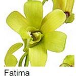 Dendrobium Fatima