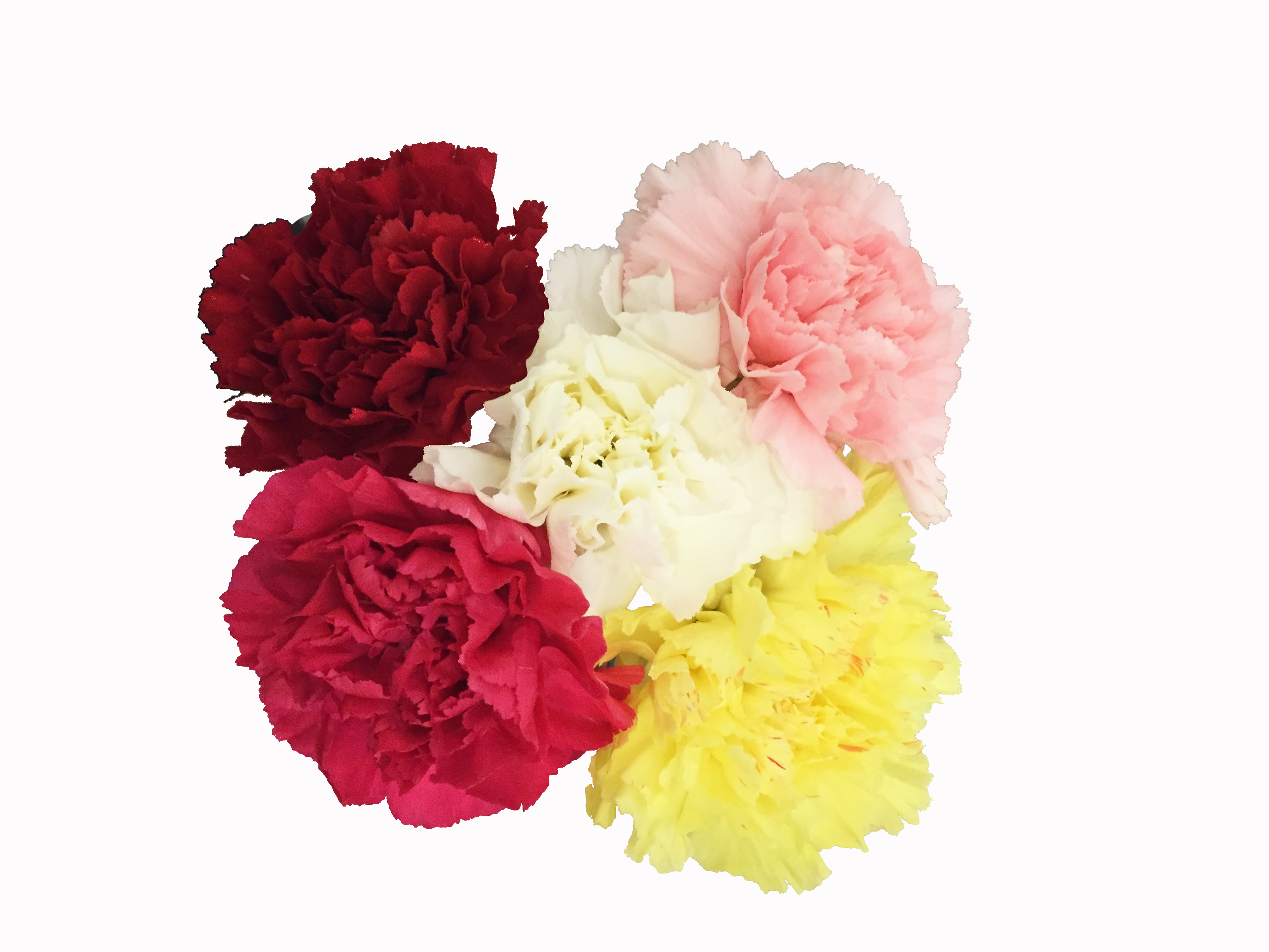 assorted-carnations