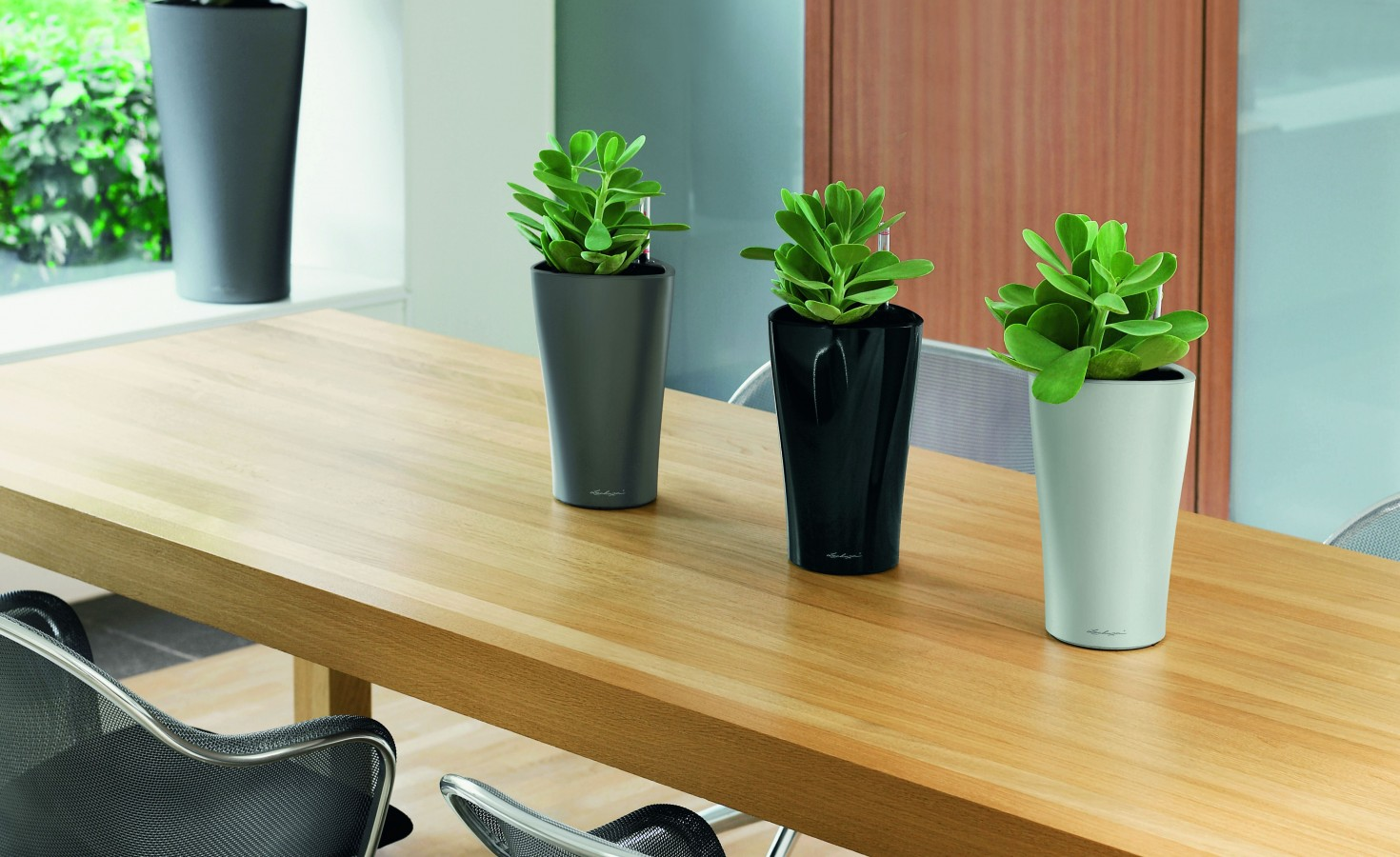 The10 best office plants metropolitan wholesale for Low maintenance office plants