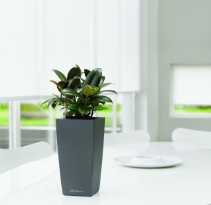 Lechuza Maxi Cubi Charcoal Metallic Self Watering Table Top Planter