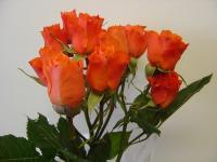 Wholesale Spray Rose Algeria