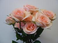 Spray Rose Chablis