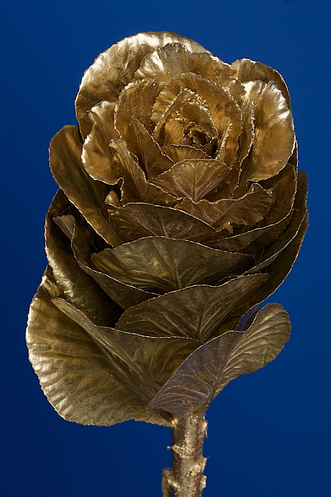 Brassica Dyed Gold