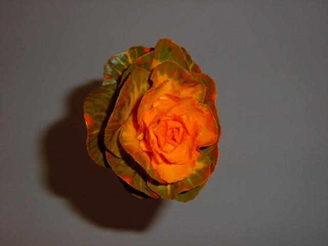 Brassica Dyed Orange
