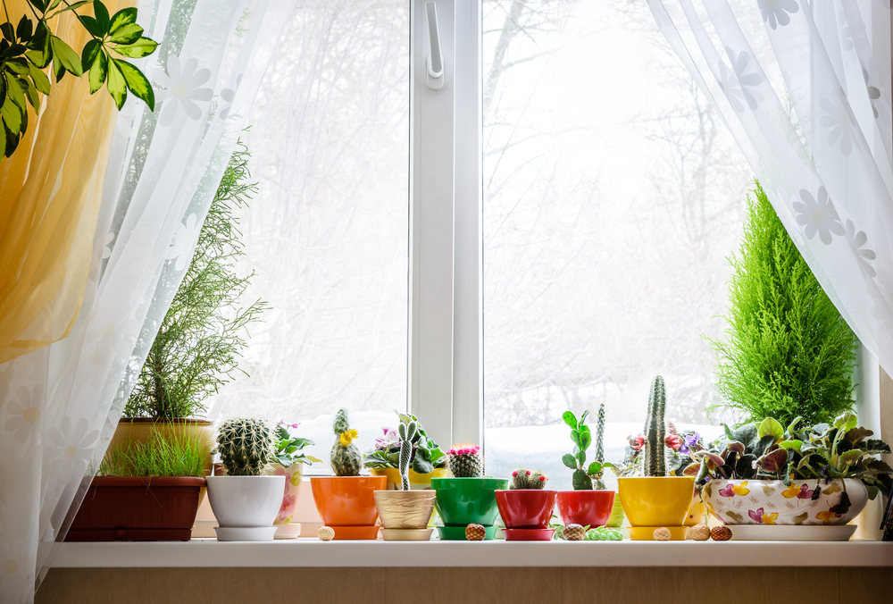 How To Brighten Your Home With Colorful Plants