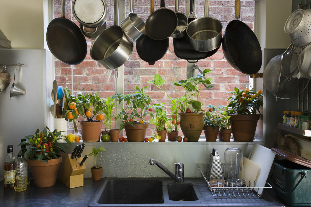 Grow Your Own Herbs and Veggies