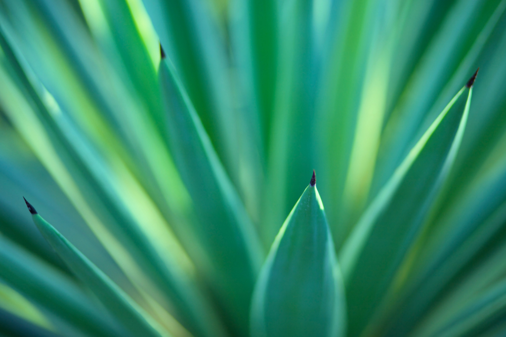 Yucca Plant Care Tips NJ Wholesale Flowers